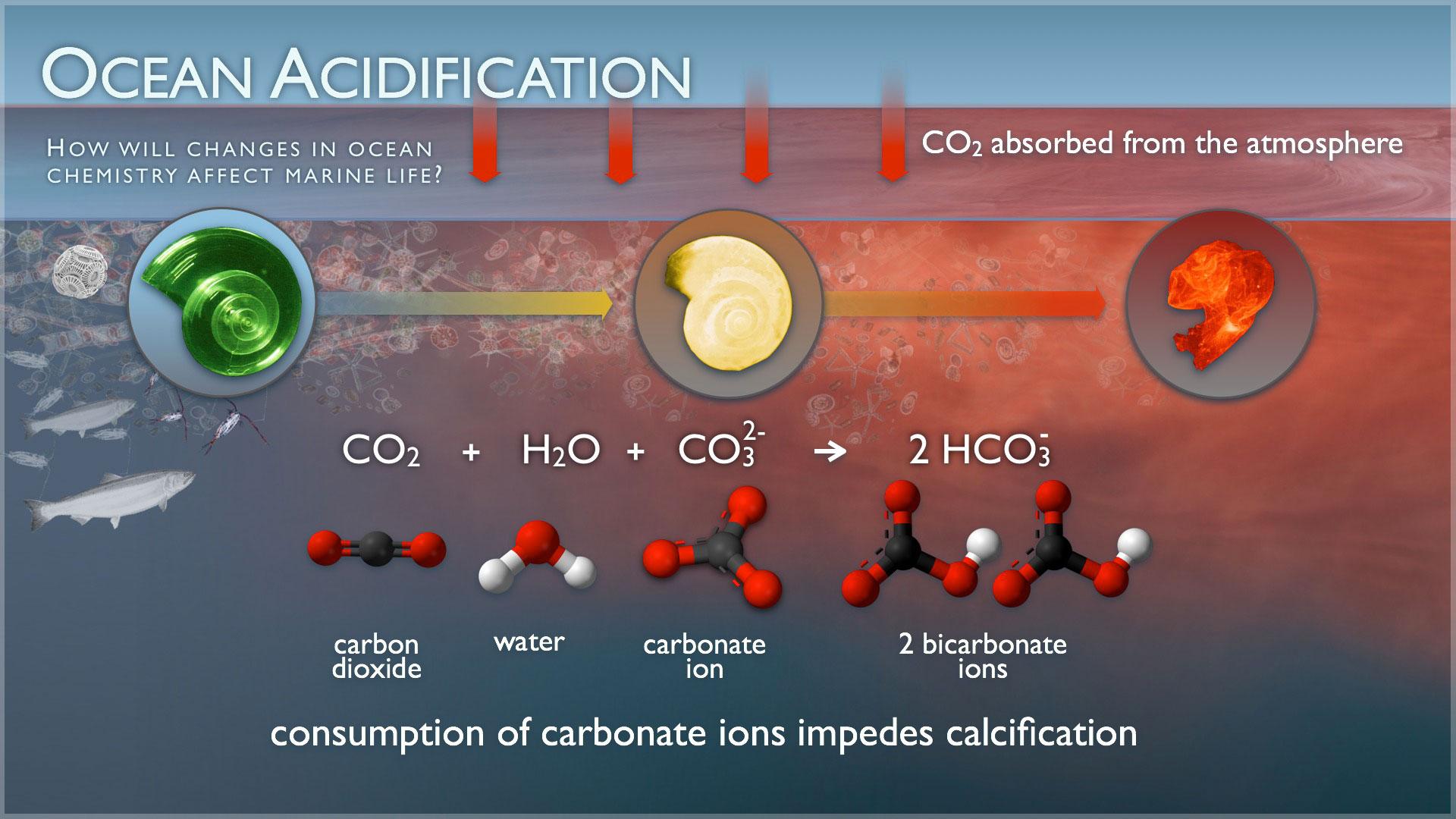 Source: NOAA - http://www.pmel.noaa.gov/co2/story/Ocean+Acidification